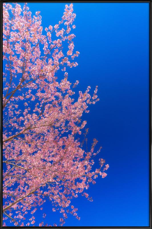 Cherry Blossom, Japan Framed Poster