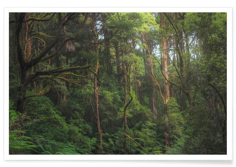 Viaggio, Foreste, Australian Bushland poster