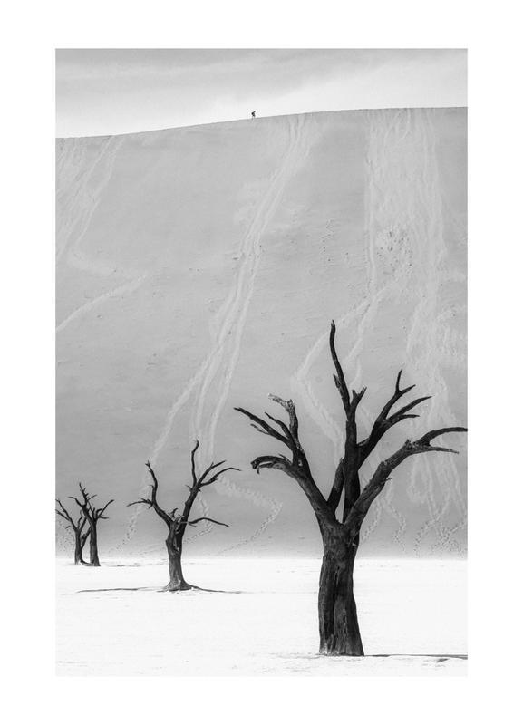 Deadvlei Trees II -Leinwandbild