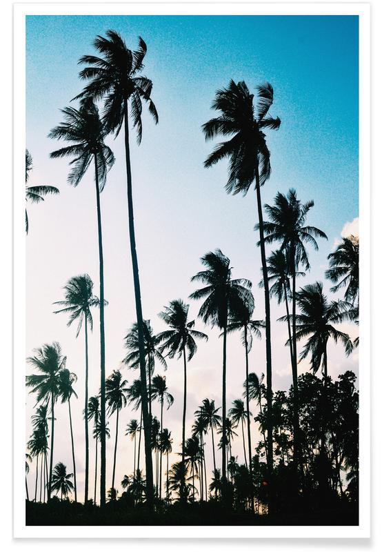 Palms at Dusk Poster