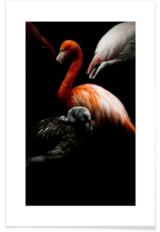 Flamingoer, The Flock Plakat