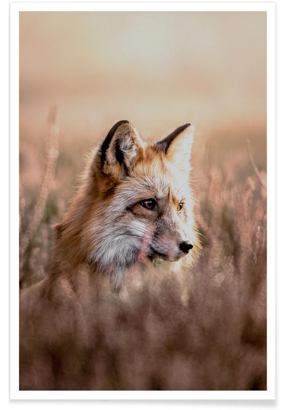 Fox in Reeds poster