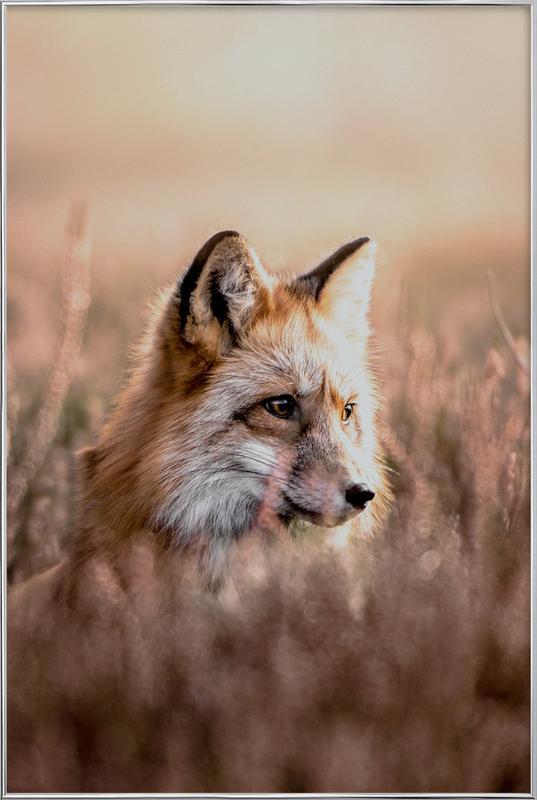 Fox in Reeds -Poster im Alurahmen