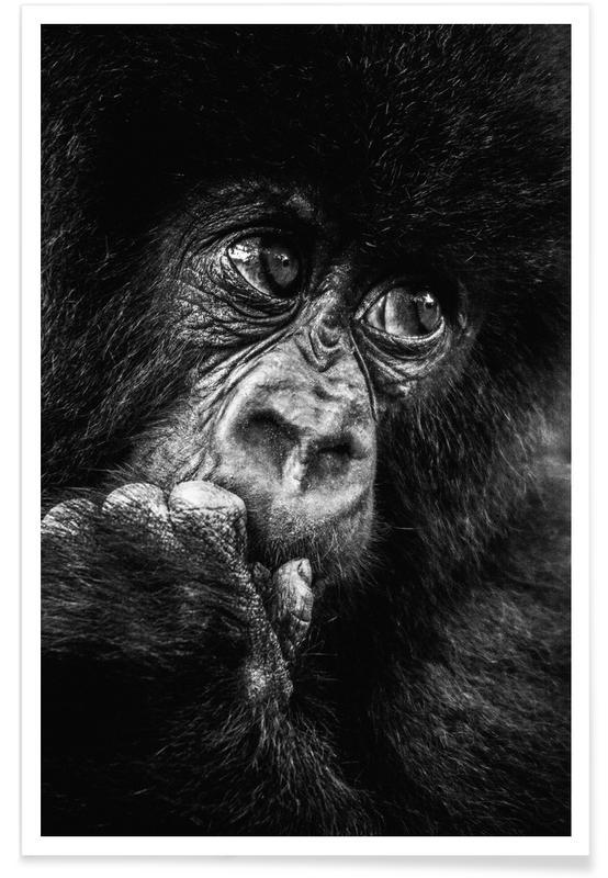 Noir & blanc, Animaux de safari, Gorilla affiche