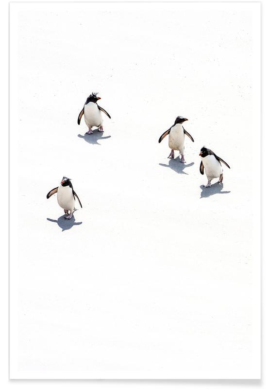 Pinguiner, Børneværelse & kunst for børn, Snow Penguins III Plakat