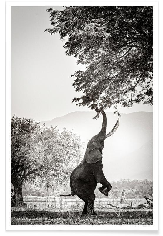 Noir & blanc, Art pour enfants, Animaux de safari, Within Reach affiche