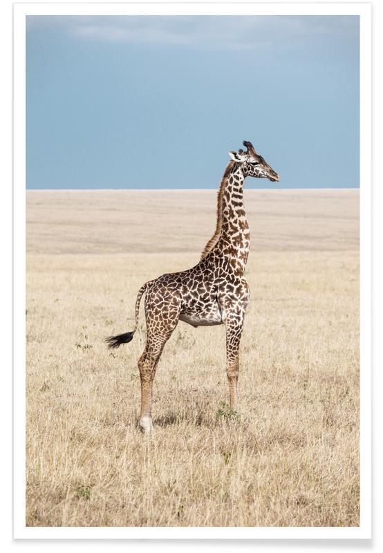 Giraffe -Poster