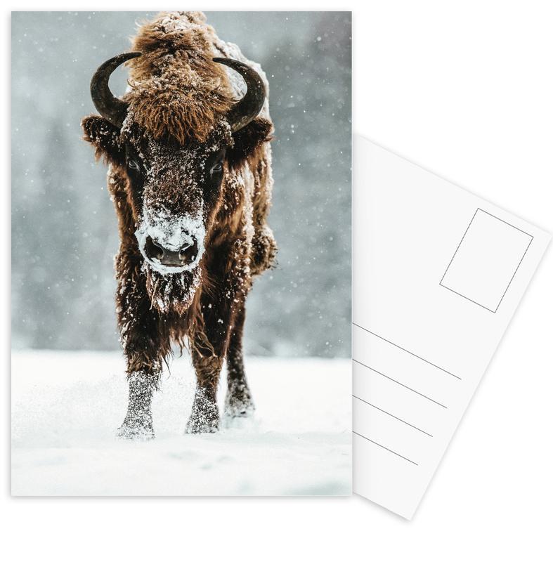 Cows, White Walker Postcard Set
