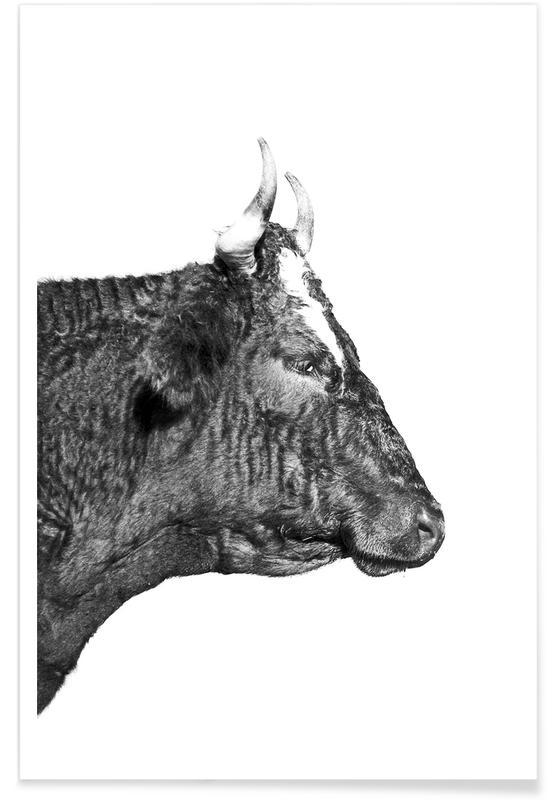 Cows, Black & White, Bull Poster