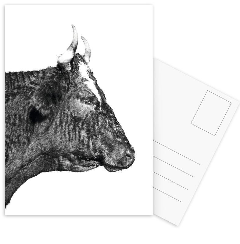 Kühe, Schwarz & Weiß, Bull -Postkartenset