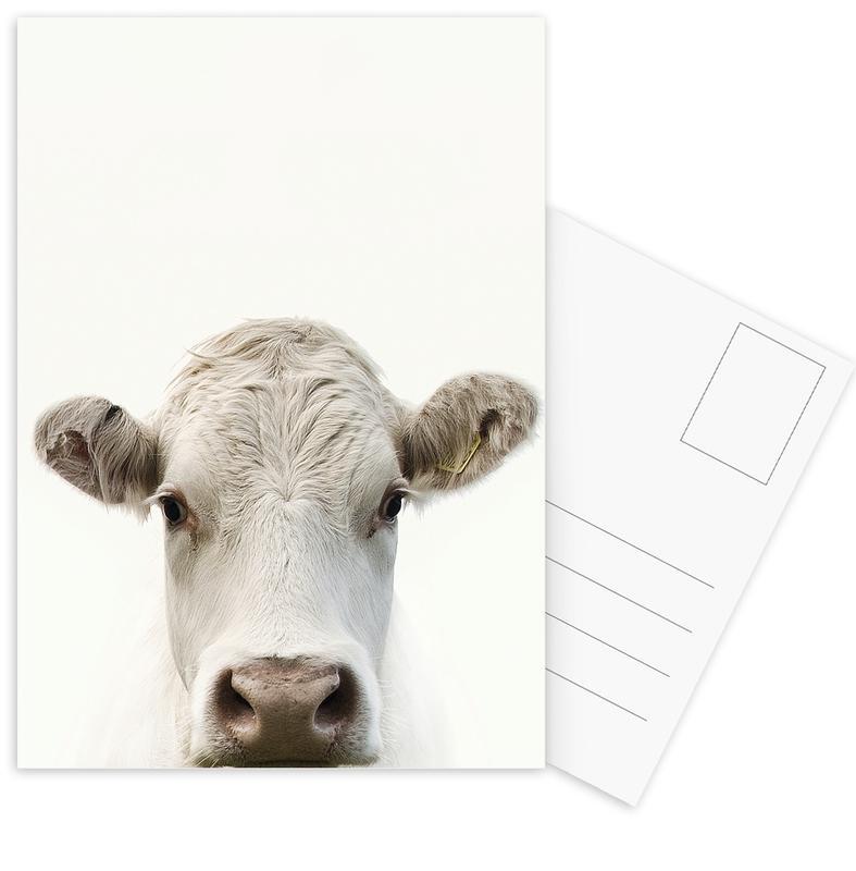 Kühe, Blanche Cow -Postkartenset