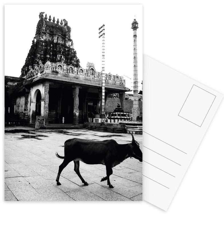 Cows, Lone Tourist Postcard Set