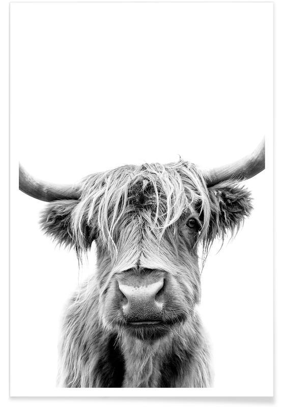 Cows, Black & White, Beneath Raised Brows Poster
