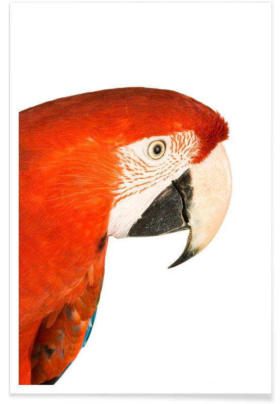 Børneværelse & kunst for børn, Papegøjer, Royal Red Parrot Plakat