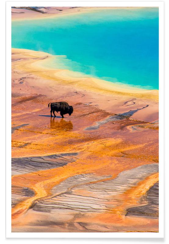 Cows, A Long Way From Home Poster