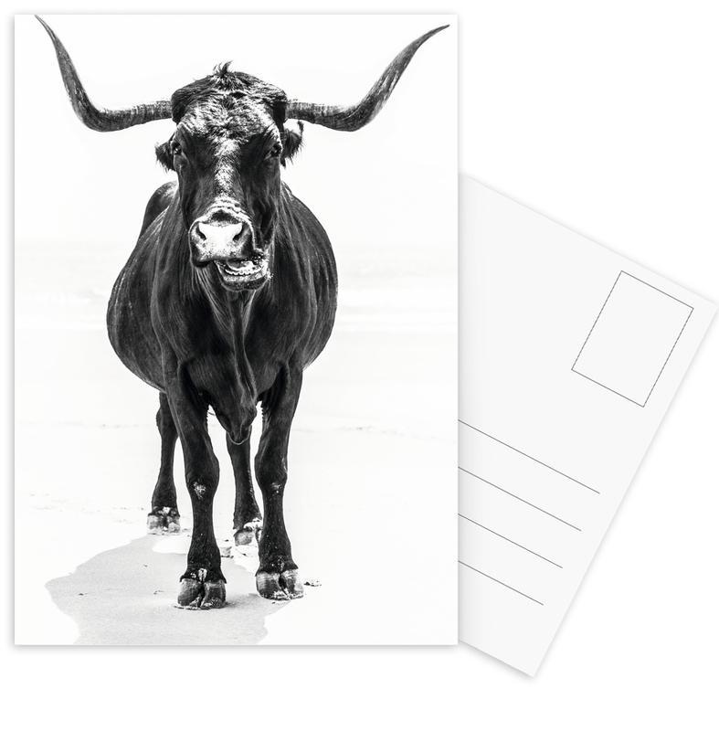 Cows, Black & White, Stand Down Postcard Set