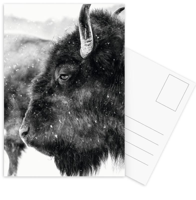 Kühe, Schwarz & Weiß, Winter Bison -Postkartenset
