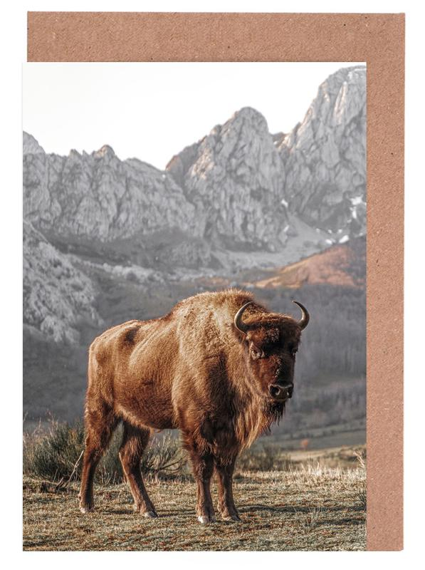 Kühe, Early Riser -Grußkarten-Set