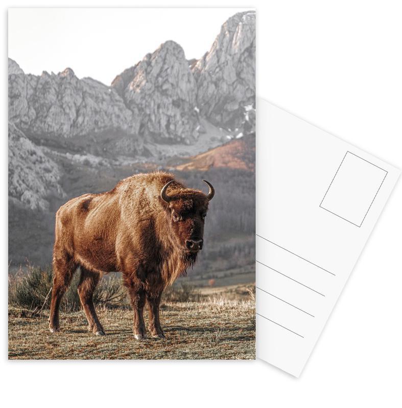 Cows, Early Riser Postcard Set