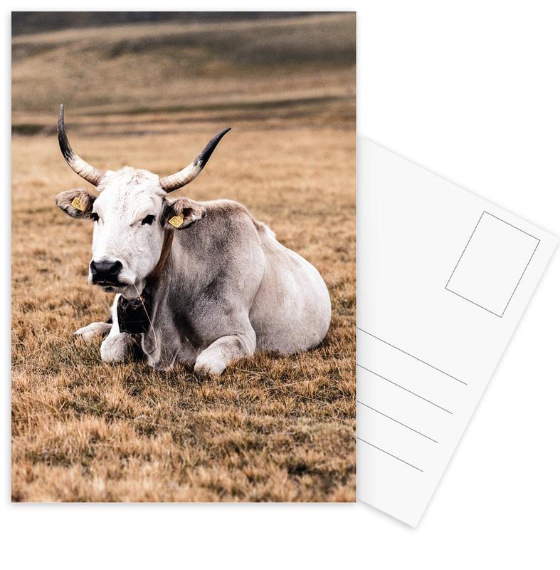 Kühe, Pasture -Postkartenset