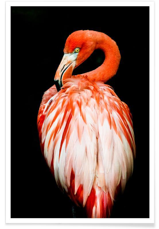 Bold Feathers Plakat
