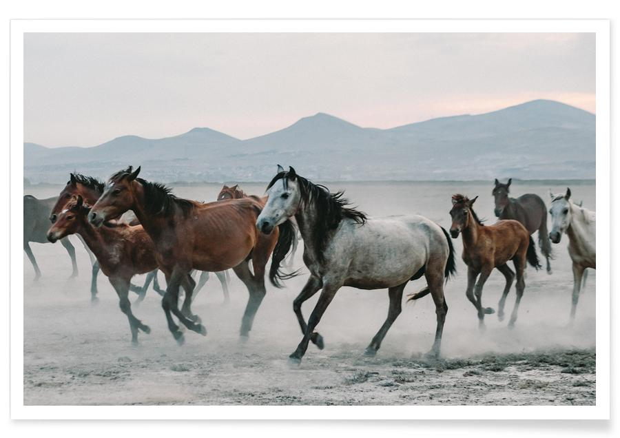 Horses, Charging On Poster