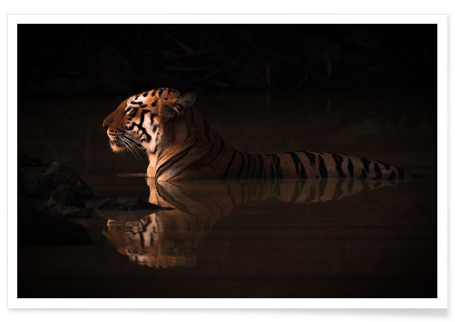 Tigers, Big Cat Bathing Poster