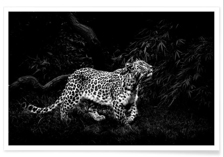 Black & White, Safari Animals, Leopard In Black And White Poster
