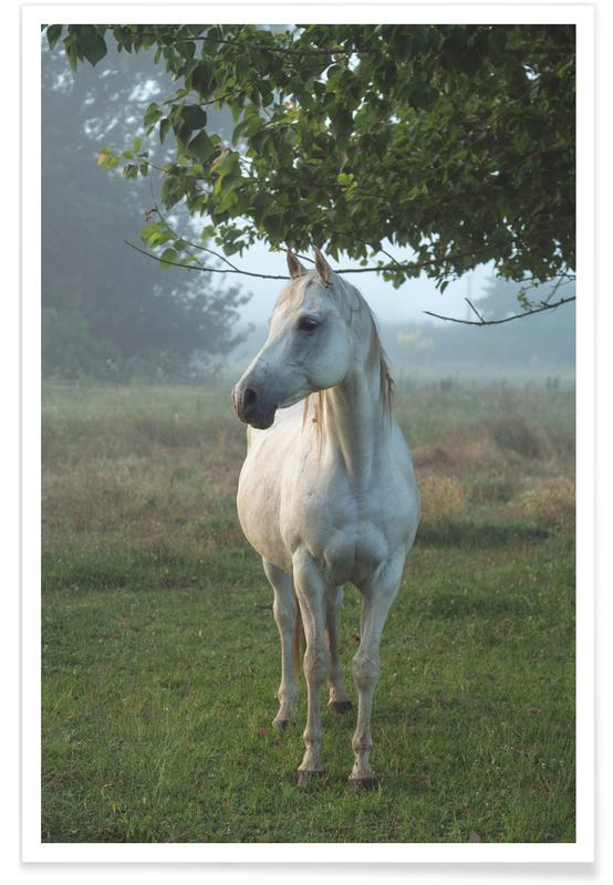 Horses, Noble Steed Poster