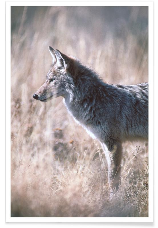 Wolves, Camouflage Poster