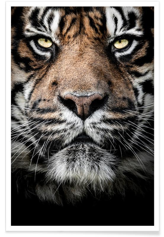 Safari dyr, Ready for the Hunt Plakat
