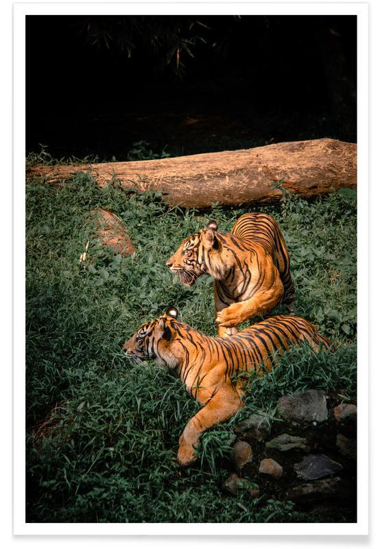 Tiger, Safari-Tiere, A Killer Couple -Poster
