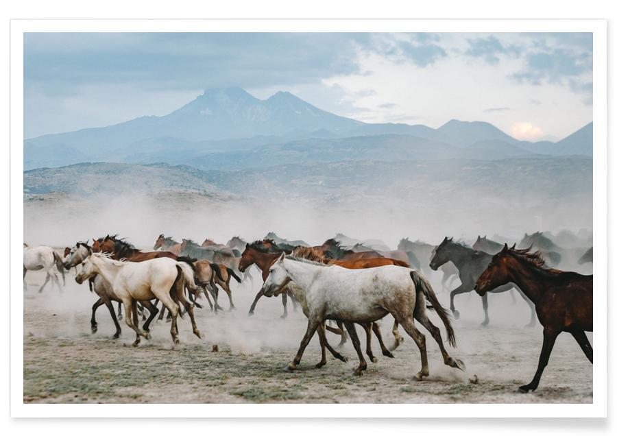 Pferde, Kick Up A Storm -Poster