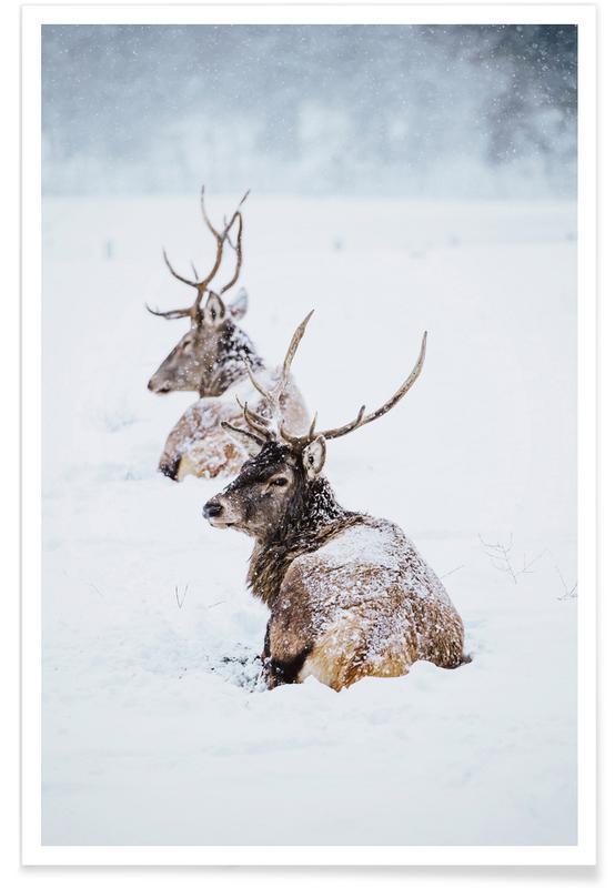 Deer, Winter Kings Poster
