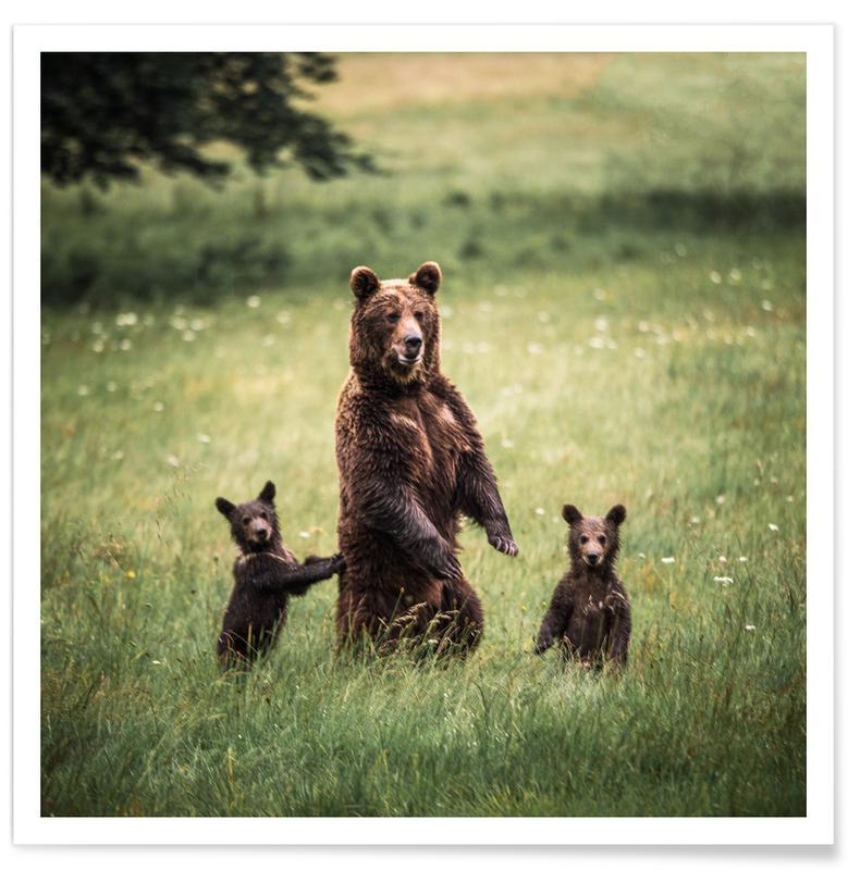Bears, The Three Bears Poster