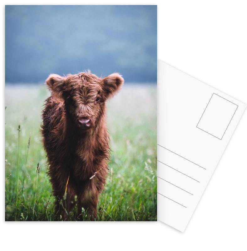 Kühe, Highland Calf II -Postkartenset