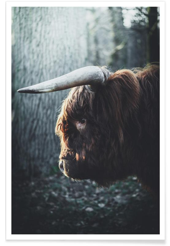 Vaches, Highland in Woods affiche