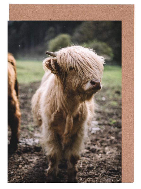 Kühe, Highland Calf -Grußkarten-Set