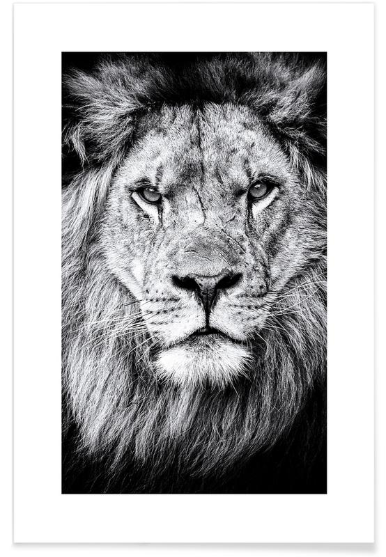 Portrait of a Regal Lion -Poster