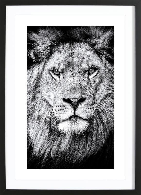 Portrait of a Regal Lion Poster i träram