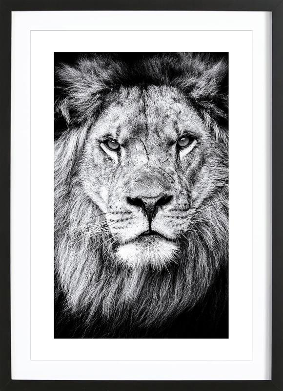 Portrait of a Regal Lion Framed Print