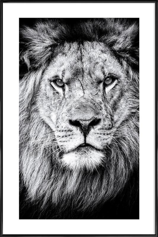 Portrait of a Regal Lion affiche encadrée