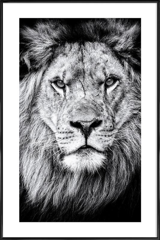 Portrait of a Regal Lion Poster i standardram