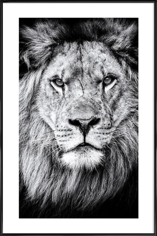 Portrait of a Regal Lion ingelijste poster