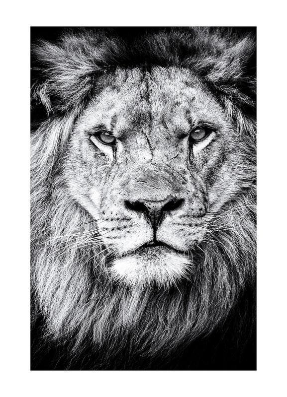 Portrait of a Regal Lion canvas doek