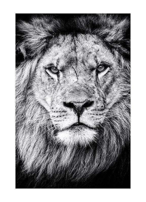 Portrait of a Regal Lion Canvastavla