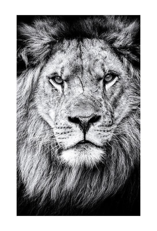 Portrait of a Regal Lion Akrylglastavla