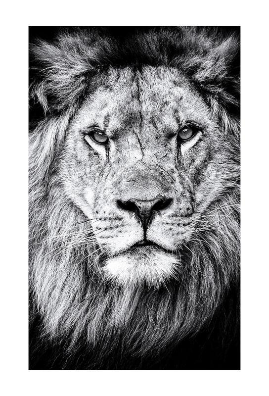 Portrait of a Regal Lion Aluminium Print