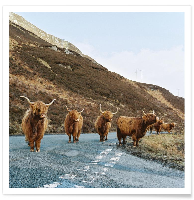 Cows, On the Road Poster