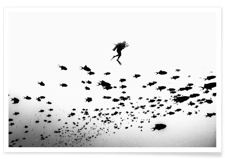 Schwarz & Weiß, Fische, Fly Fishing -Poster